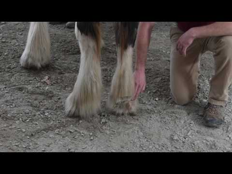 Caring for Your Horse - Scratches