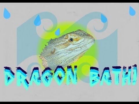 AMAZING BEARDED DRAGON ACTIVITIES - BATHS HIMSELF!