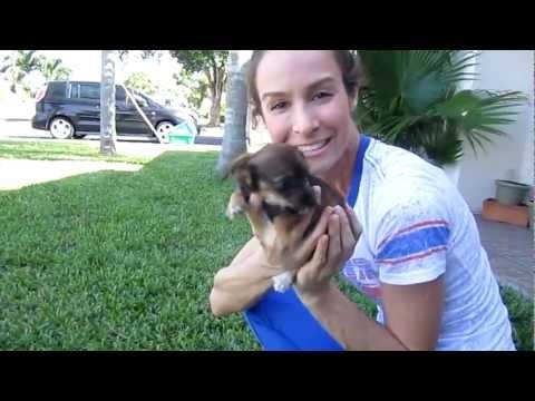 Baby Star-Puppy