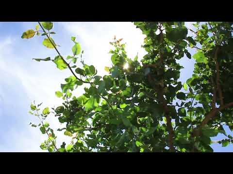 LandLeader TV Season 2 Episode 12 Sneak Peek