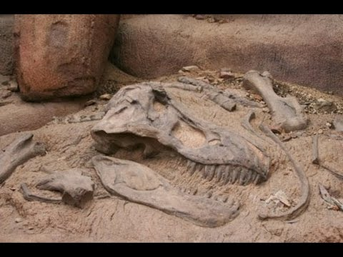 Unearthing Dinosaur Remains : Documentary on Finding Dinosaur Fossils (Full Documentary)