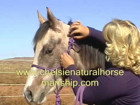 How to Halter and How to Tie Rope Halter onto your Horse Video Haltering