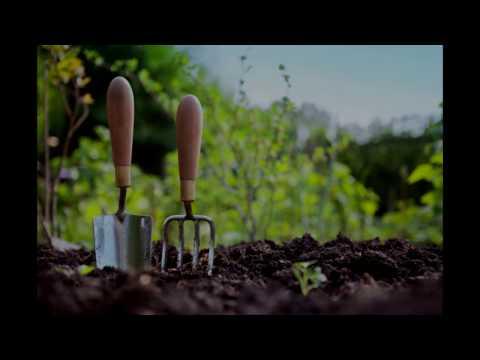 Look at some seeds & Indoor Garden