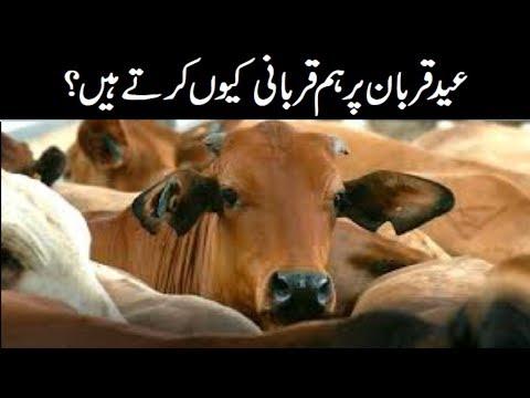 Eid ul Azha per hum qurbani kiu kartay hein ?