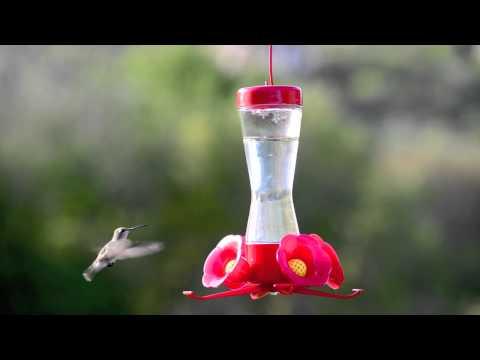 Perky-Pet® Pinch-Waist Glass Hummingbird Feeder