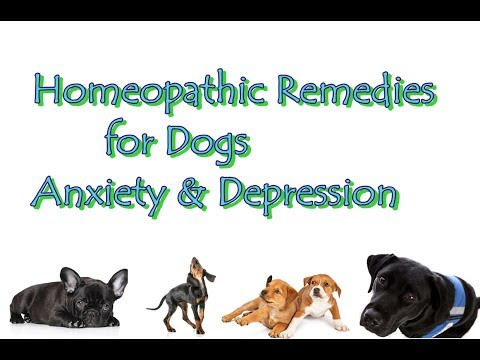 Homeopathic Remedies for Dogs Anxiety & Depression
