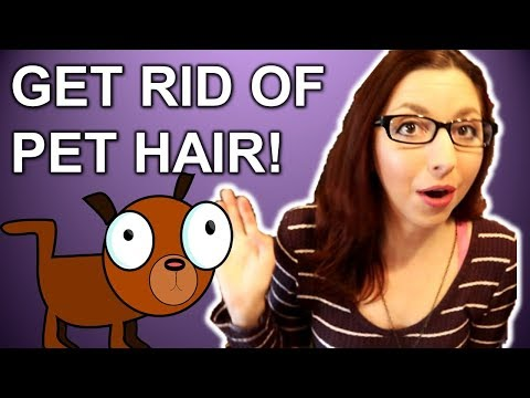 Get Rid Of Pet Hair And Cut Down On Shedding!