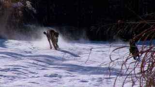 Cheetah Savanna and Dog Max Play in Snow - Cincinnati Zoo