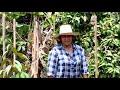 สอนเทคนิคปลูกทุเรียนแบบได้ผลดี ตามดูแบบเกษตรกร เนินมะปราง พิษณุโลก 0926252544
