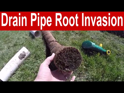 How to Prevent a Root Invasion in a Drain Pipe
