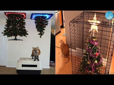 Most Hilarious Ways How To Protect Christmas Trees From Pets