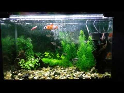 Aquarium decorated with natural looking artificial Plants