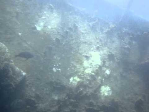 Snuba Diving in Aruba