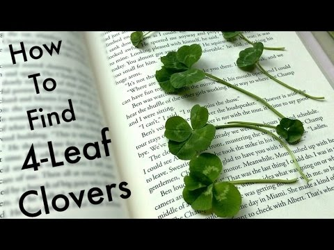 How to find FOUR-LEAF CLOVERS (and a surprise 5-leaf!)