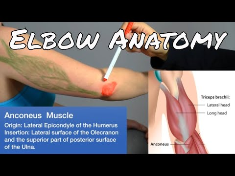 Anatomy of the Elbow - Motion Specific Release