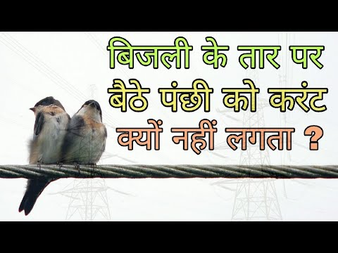 Why Bird don't get Shocked on Electric Power Lines (In Hindi)