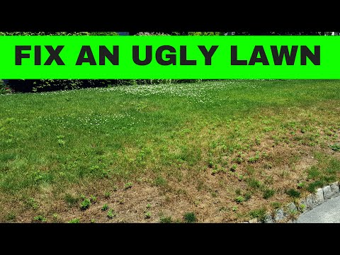 How to make an ugly lawn, an amazing lawn - Part 1