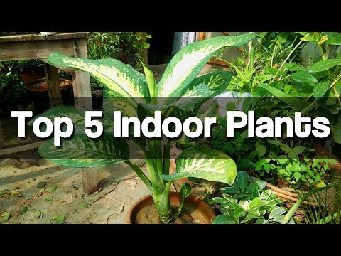 Top 5 Best Indoor Plants - Easy to Grow Indoor Plants - (Urdu|Hindi)