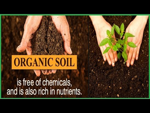 How to Make Instant Organic Soil at Home  In 5-Minutes