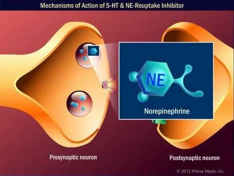 Mechanisms of Action of 5 HT & NE-Reuptake Inhibitor