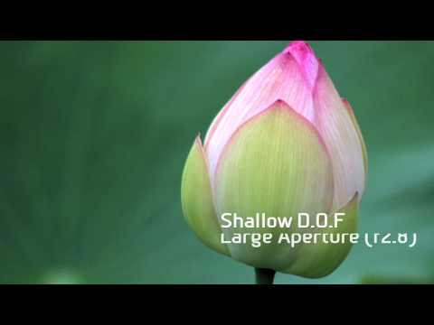 Canon EOS - Getting Started: Depth of Field Photography
