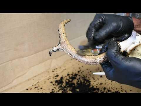 How To Restore Old Deer Antlers