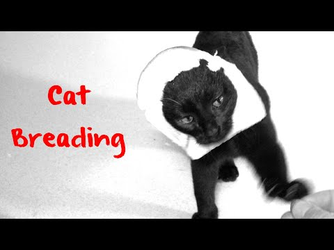 Cat Breading COMEDY -   funny!   ✅
