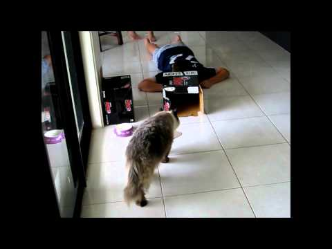 How to Entertain a Cat