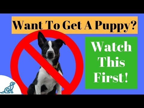 6 Reasons NOT To Get A Puppy