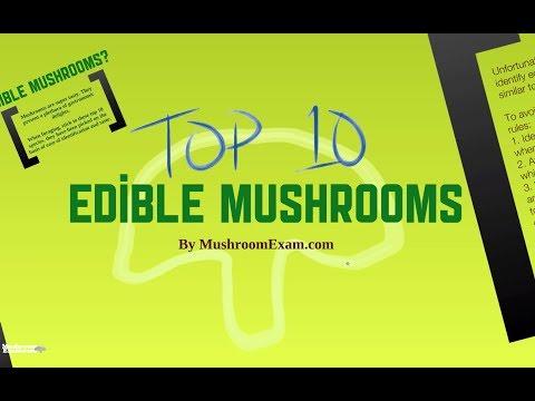 Top 10 Edible Mushrooms