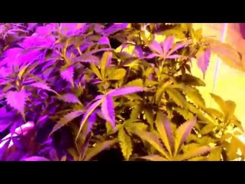 Got my light mover up and running over the scrog