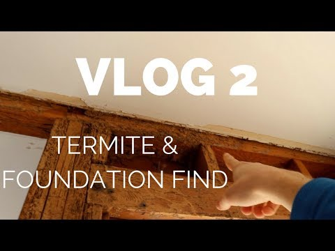What was my day like?  Foundation Find  Termite Find