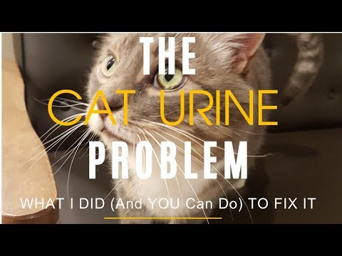 Cat Urine Problems: 5 Ways To Solve It At Home