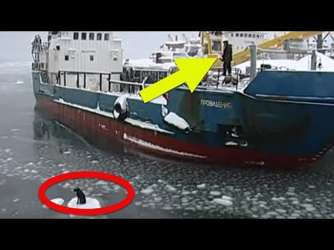 When A Fisherman Spotted This Shivering Dog Stranded On An Ice Floe, He Attempted An Insane Rescue