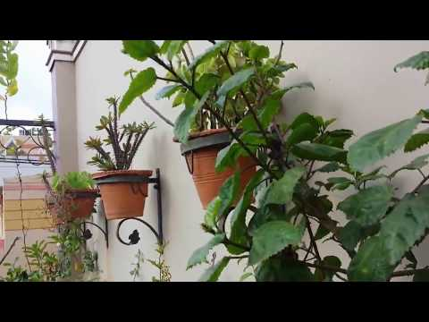 How to make beautiful wall mount tree pot/ hanging wall planting garden
