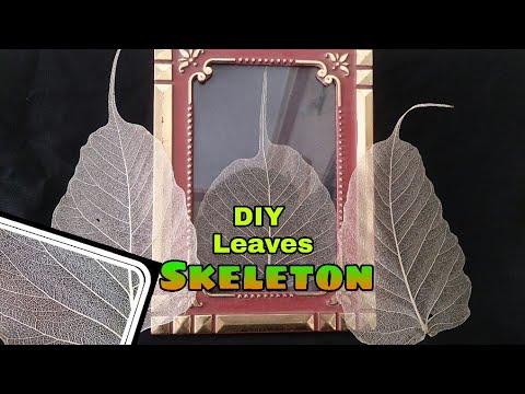 DIY Leaves Skeleton - How to Make leaves Skeleton - Making Leaf Skeleton