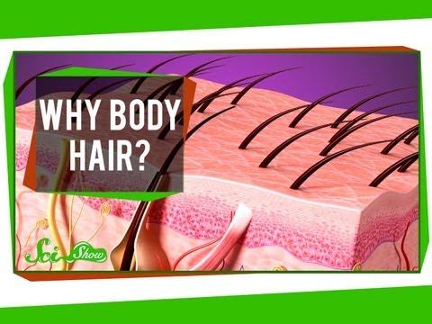 Why Body Hair?