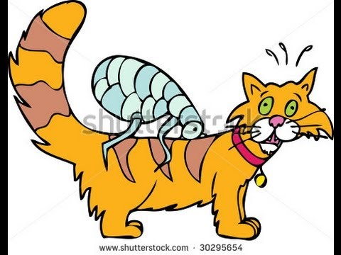 How to Get Rid of Fleas on Cats | best way to get rid of fleas on cats