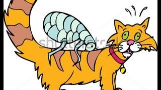 How To Get Rid Of Fleas On Cats Best Way To Get Rid Of Fleas On Cats