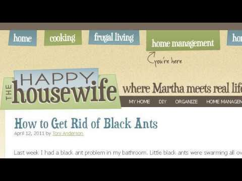 How-To Get Rid Of Ants In The Dishwasher