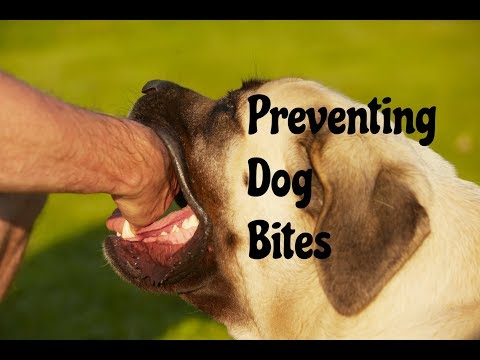 Preventing a Dog Bite