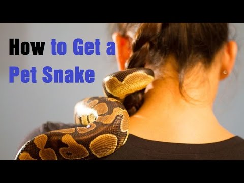 How to Get a Pet Snake
