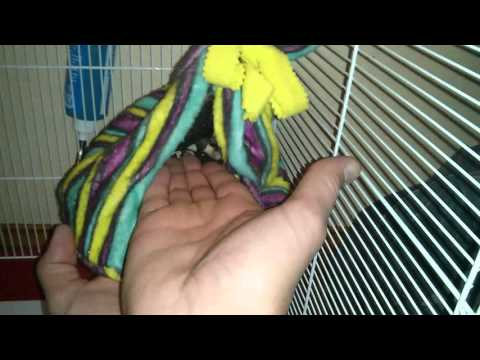 Me holding a sugar glider...HE BITES! (NOT MY PET BTW)