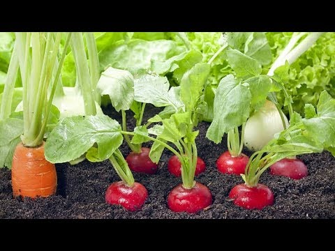 9 For the Fastest Growing Veggies, You Could Harvest Immediately