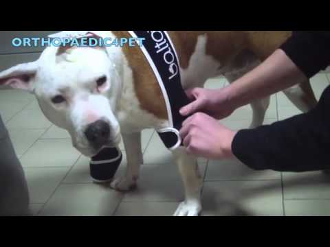 BT SOFT PLUS- Double elbow brace for Dogs
