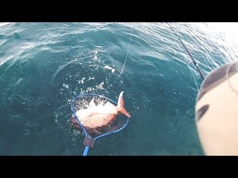 Omaha Bay Snapper Fishing Auckland