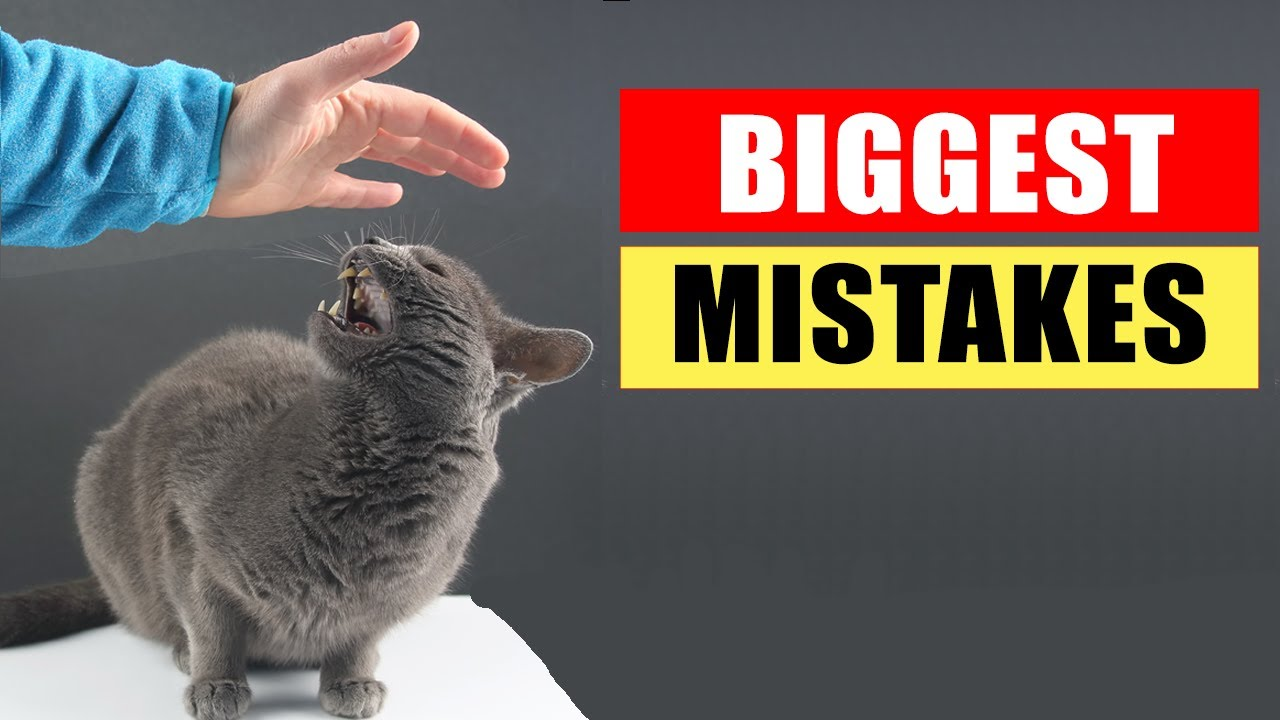 20 Common Mistakes Cat Owners Make