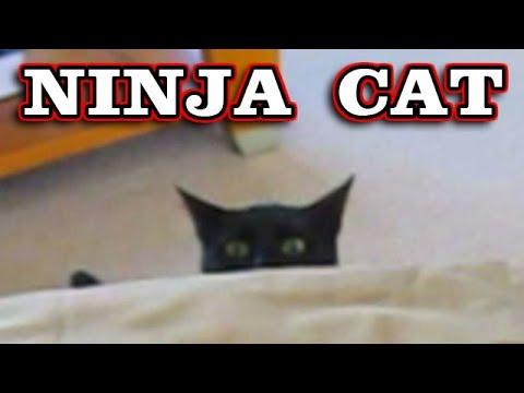 NINJA CAT Jumps! Climbs! Sneak Attacks! Crazy Kitten her name is Squeek