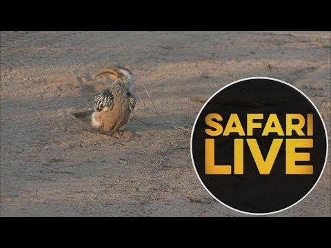 safariLIVE - Sunrise Safari - 2018, 16. June