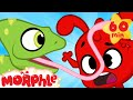 Funny Animals Morphle Meets A Chameleon Funny And Cute Animal Cartoons For Kids